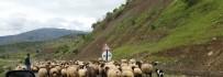 HASAN YıLDıZ - Kulp'ta Yayla Sezonu Açıldı