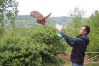 KOZCAĞıZ - Sağlık Merkezinde Mahsur Kalan Baykuş Kurtarıldı