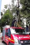 Ağaca Çıkan Kedi Mahsur Kaldı