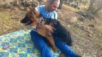 Aydın'da Trafik Kazası Açıklaması 1 Kişi Öldü