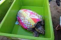 DENİZ KAPLUMBAĞALARI - Dev Kaplumbağayı İyileştirip Denize Saldılar