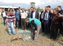 ŞERIF YıLMAZ - Kızıl Akbaba Ve Çakal, Özgürlüğüne Kavuştu