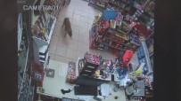 ÇAKAL - (ÖZEL HABER) Acıkan Çakal Alışverişe Çıktı