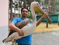 PELIKAN - Pelikan için 500 kilometre kat ettiler