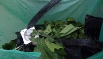 Şüpheli Çantadan Asma Yaprağı Çıktı