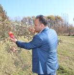 ERKEN UYARI - Tarım Müdürü Yolcu Çiftçileri Uyardı