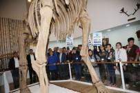 ULUSAL EGEMENLIK - Türkiye'nin Tek Zooloji Ve Doğa Müzesine Yoğun İlgi