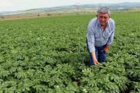 PIYASALAR - Çiftçi 'Sarı Lira'Dan Umutlu