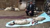SEL FELAKETİ - Erciş'te Sel Felaketinde 26 Kuzu Telef Oldu