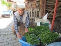 HASANLAR - Hisarcık'ın Sebze Fidesi İhtiyacını Hasanlar Köyü Karşılıyor