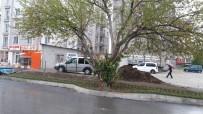 EKOLOJIK - İpekyolu Belediyesi, Asırlık  Dut Ağacı İçin Yolun Yönünü Değiştirdi