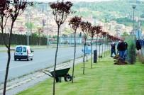 GÜLÜÇ - Kdz. Ereğli'de Yeşil Alanlar Ağaçlandırılıyor