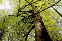 Kuzalan Tabiat Parkı 500 Yıllık Ağaçları İle Dikkat Çekiyor