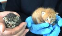 YAVRU KEDİ - Yavru Kedilere Polis Şefkati