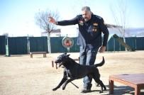 SİVİL SAVUNMA - K-9 Bomba Arama Köpekleri Göreve Hazır