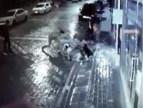 SOKAK KÖPEĞİ - Manisa'da Köpeğe İşkence Yapan Şahıslar Yakalandı