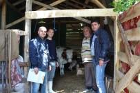 KREDİ DESTEĞİ - Süt Sığırcılığı 19 Aileye İş Kapısı Oldu