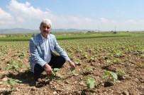 BOĞAZKÖY - Yenişehir'de 400 Bin Dekar Alan Suya Kavuşuyor