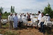 TARIM BAKANLIĞI - Bayramiç'te Ana Arı Üretim Kursu Açıldı