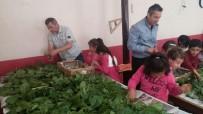 ÖĞRETMEN - Köy Okulunda İpek Böceği Üretimi