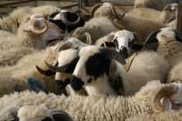 MEHMET ERDEM - Koyun Ve Keçi Üreticilerine Küpe Ödemleri Başlıyor