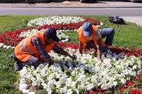 İLKBAHAR - Manavgat'ta 186 Bin Mevsimlik Çiçek