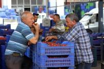 RUSYA - Rusya Kapısı Açılmazsa Domatesler Salça Olacak