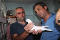 BİZİMKİLER - Denizli'de Güvercin Güzellik Yarışmasın Yoğun İlgi