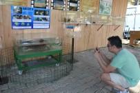 CARETTA CARETTA - Dünyanın İlk Çene Protezli Caretta Carettası Müzede Sergileniyor