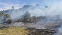 ORMAN YANGINI - Otları Yakarken Ormanı Tutuşturdu