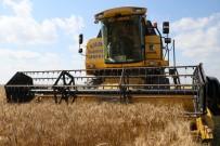 MECLIS BAŞKANı - Çukurova'da Buğday Hasadı Başladı