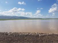 Patnos'ta Yağışlar Tarla Ürünlerini Etkiledi; Üreticiler Perişan