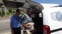 KÖPEK YAVRUSU - Seyir Halindeki Kamyon Kasasından Karayoluna Kuzu Düştü