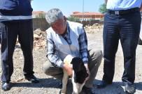 KÖPEK YAVRUSU - Seyir Halindeki Kamyon Kasasından Kuzu Düştü