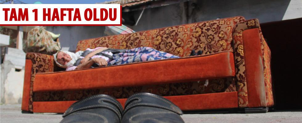 Sultan Nine 1 haftadır sokakta kalıyor