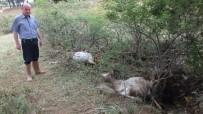 Balıkesir'de Köydeki Selde 50 Keçi Telef Oldu