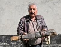 BIRINCI DÜNYA SAVAŞı - Dededen kalma asırlık protez kolu gururla saklıyorlar