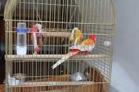 YIKIM ÇALIŞMALARI - Galatasaray Adası'nın Papağanı 'Cimbom' Da Tahliye Edildi