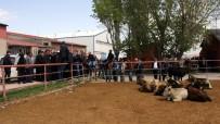 HAYVAN PAZARI - Erzurum'daki Canlı Hayvan Pazarı Kapatıldı