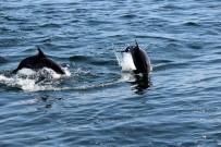 BAYRAM ÖZTÜRK - Öztürk Açıklaması 'Karadeniz'deki Balıkları Yunuslar Bitirmiyor'