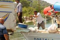 KAPAKLı - Keçiler Tekneyle Taşınıyor