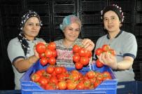 ZORUNLU TRAFİK SİGORTASI - Nisanda Zam Şampiyonu Domates Oldu