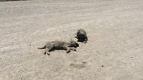 YAVRU KÖPEK - Yavru Köpek Ölen Kardeşinin Yanından Ayrılmadı