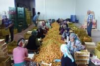 YALAN HABER - '18 Ton Kayısıda Akdeniz Sineği Bulundu' İddiasına İhracatçılardan Tepki