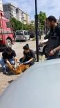 KARTAL BELEDİYESİ - Kartal'da Sokak Hayvanları Kuduza Karşı Aşılandı