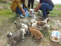 KÖPEK YAVRUSU - Sokağa Atılan Yavru Köpeklere Vatandaşlar Sahip Çıktı