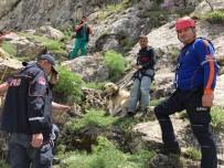 KURTARMA OPERASYONU - 7 Gündür Dağda Mahsur Kalan Çoban Köpeği Pulsar Kurtarıldı