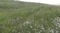 Dolu, Tarım Arazilerine Zarar Verdi