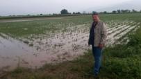 KOLDERE - Manisa'da Dolu Yağışı Üzüm Bağlarını Vurdu