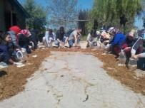 KÜLTÜR MANTARı - Ordu'da Mantar Yetiştiriciliği Kursu Açıldı